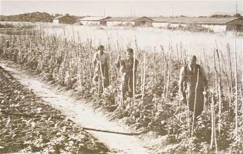 Vegetable gardens administered by the American Friends Service Committee as part of a Quaker relief effort for prisoners at the Gurs camp. Gurs, France, ca. 1943.