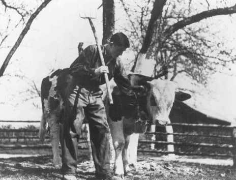 A Jewish youth on a Zionist agricultural training farm, sponsored by the Joint Distribution Committee. Fuerth, Germany, June 13, 1946.