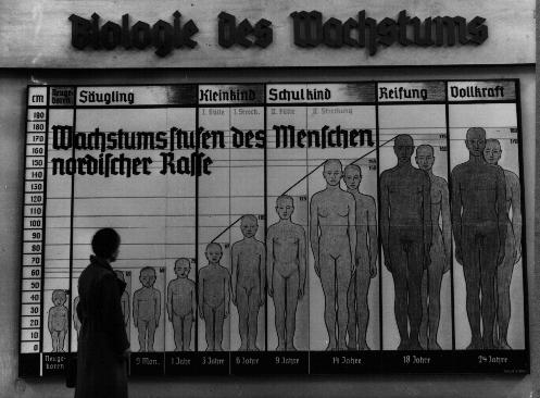 "The Nazis used public displays to spread their ideas of race. The chart shown here is titled ""The Biology of Growth,"" and is labeled ""Stages of Growth for Members of the Nordic Race."""