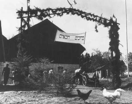 Ferme de formation agricole préparant des réfugiés juifs pour la vie en Palestine, parrainée par l'UNRRA (Administration des Nations Unies pour les secours et la reconstruction). Fulda, Allemagne, après-guerre.