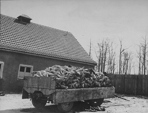 A wagon is piled high with the bodies of former prisoners in the newly liberated Buchenwald concentration camp. Buchenwald, Germany, April 16, 1945.