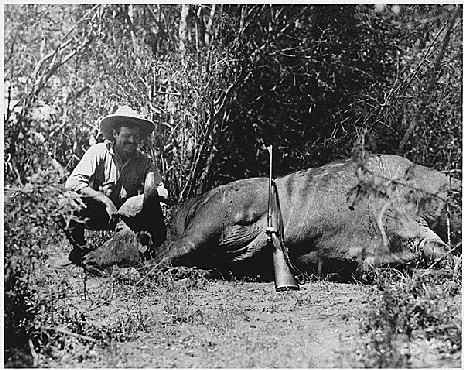 Ernest Hemingway on safari, ca. 1933.