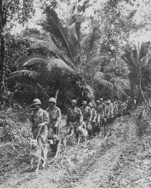 Des marines américains se rendent sur la ligne de front dans les jungles de Bougainville, l'une des îles Salomon, dans l'océan Pacifique. 1943.