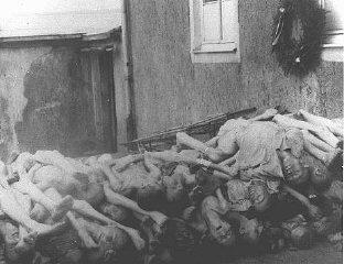 Corpos empilhados atrás do crematório em Buchenwald...