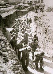 Travaux forcés dans la carrière du camp de concentration...