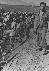 Inmates of a forced-labor camp for Jews in Hungarian-occupied...