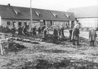 Prisioneiros efetuando trabalho escravo no campo de...