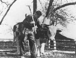 A Jewish youth on a Zionist agricultural training farm...