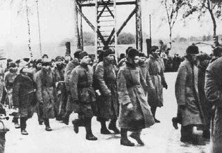 Soviet prisoners of war arrive at the Majdanek camp...