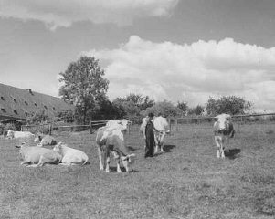 A Jewish youth on an agricultural training farm that prepared Jewish refugees for life in Palestine, sponsored by the Joint Distribution Committee. Fuerth, Germany, June 13, 1946.
