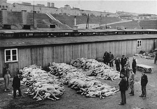Piles of corpses, soon after the liberation of the...