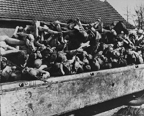 A wagon is piled high with the bodies of former prisoners in the newly liberated Buchenwald concentration camp. Buchenwald, Germany, April 11-May 1945.