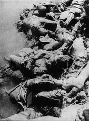 Victims of Ustasa (Croatian fascist) atrocities on the banks of the Sava River.