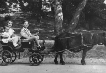 Seven-year-old Gyorgy Pick drives his two cousins, Agnes Szalai (age seven) and Susan Lederer (age one), in a miniature horse-drawn carriage in a city park in Budapest.