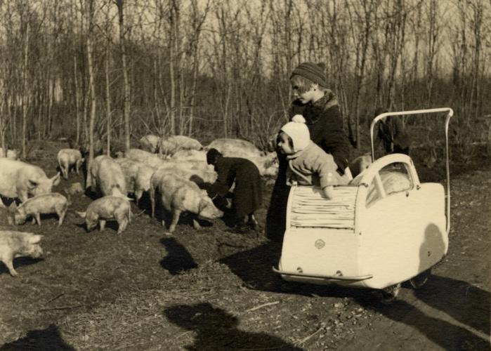 Katie Engel leans out of her stroller to look at the pigs on her father's farm in Burgenland, Austria.