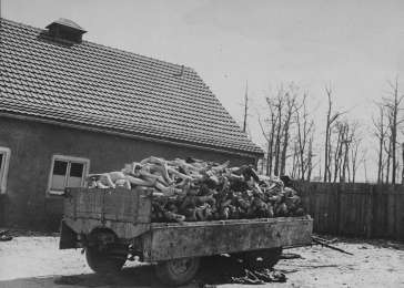 A wagon is piled high with the bodies of former prisoners in the newly liberated Buchenwald concentration camp. Buchenwald, Germany, April 16, 1945. <i>US Holocaust Memorial Museum, courtesy of National Archives and Records Administration, College Park, MD</i>
