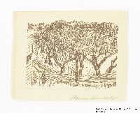 Miriam Sommerburg Artwork Collection Image, 1989.315.3 Woodcut  Click to enlarge