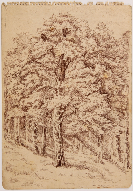 2007.521.7 front Drawing of a large leafy tree near her hiding place by a Jewish teenager