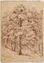 Drawing of a large leafy tree near her hiding place by a Jewish teenager