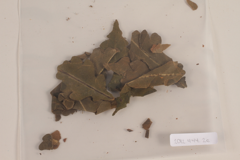 2012.444.2 c front Oak leaf wreath separated into sections awarded prewar to a Jewish youth for swimming across the Rhine River