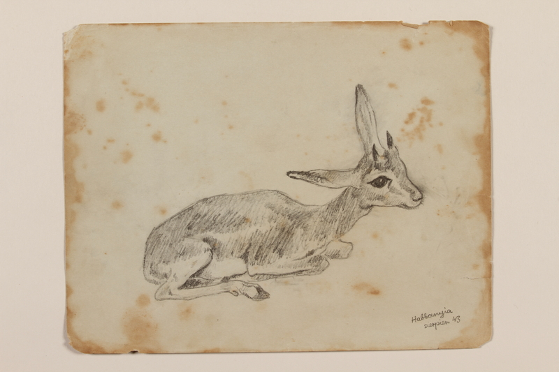 2012.471.55 front Pencil drawing of a young Dorcas gazelle created by a Jewish soldier, 2nd Polish Corps