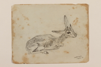 2012.471.55 front Pencil drawing of a young Dorcas gazelle created by a Jewish soldier, 2nd Polish Corps  Click to enlarge