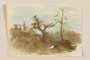 Muted watercolor of two trees in a green, overgrown field by a Jewish soldier, 2nd Polish corps