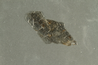 2016.552.4 side A Flake of mica collected from Theresienstadt by a German Jewish factory worker  Click to enlarge