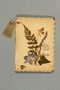 Notebook with pressed flower cover
